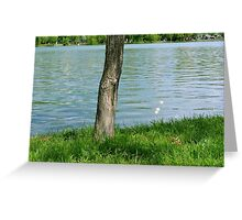Tree trunk by the river. Greeting Card