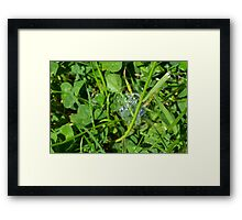 Green grass pattern with soap bubble. Framed Print