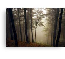 Kingsland Forest - Tasman - New Zealand Canvas Print