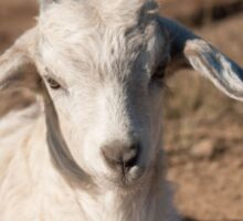 White Kid Goat Sticker