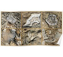 Gozo Island Fossils Poster