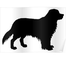 Bernese mountain dog silhouette Poster