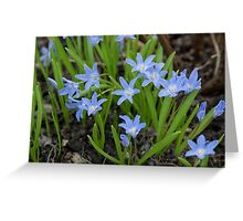 blue  flowers in top view of meadow  Greeting Card