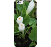 Many white small  flowers  iPhone Case/Skin