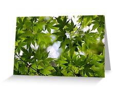 beautyful leafs Greeting Card