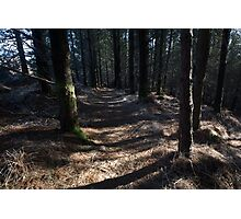 inverewe pine trail Photographic Print