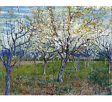 Vincent van Gogh The Pink Orchard Photographic Print