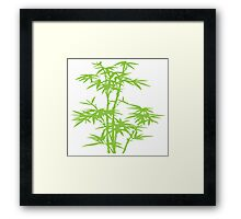 Green herb Framed Print