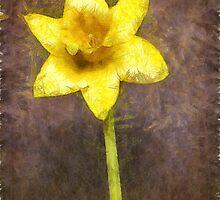 Daffodil Pencil by Edward Fielding