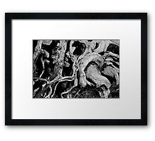 twisted roots (Mt Ossa) Framed Print