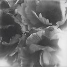 Flowers big in black and white by Ale Di Gangi