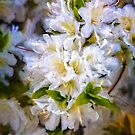 White Rhododendron by PhotosByHealy