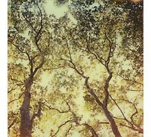 The trees produce the air Photographic Print