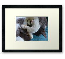 Soft cat; big paws; sleeping Framed Print