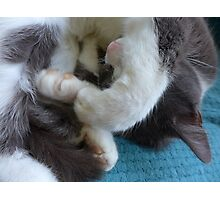 Soft cat; big paws; sleeping Photographic Print