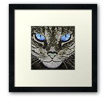 Blue eyed cat Framed Print