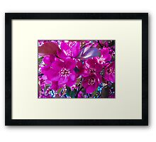 Pretty in Fuchsia Framed Print