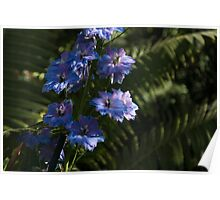 Larkspurs and Ferns - a Lush Summer Garden Poster