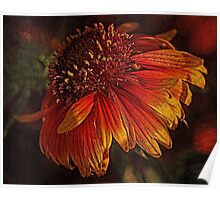 Flowers - Red And Yellow  Poster