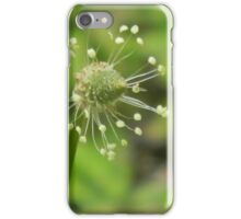 Plantain, Blowin in the Wind iPhone Case/Skin