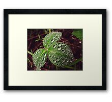 Drops of water everywhere Framed Print