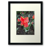 Red Flower like an Open Flame Framed Print