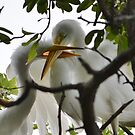 Mom! Baby Great Egrets by Kate Farkas