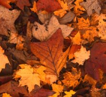 Fall Foliage Pattern Sticker
