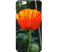 First Poppy of the Season in Mo's Garden iPhone Case/Skin