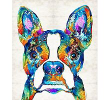 Colorful Boston Terrier Dog Pop Art - Sharon Cummings Photographic Print