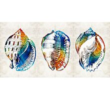 Colorful Seashell Art - Beach Trio - By Sharon Cummings Photographic Print