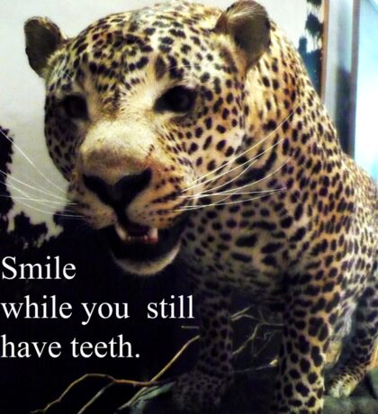 Smile While You Still Have Teeth Sticker