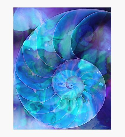 Blue Nautilus Shell By Sharon Cummings Photographic Print