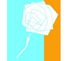 Roses in Shards Photographic Print