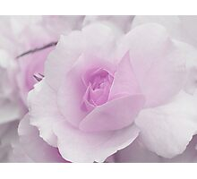 Spring Time with Lavender Rose Photographic Print