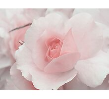 Spring Time with Pink Rose Photographic Print