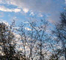 Sky Glory Through The Screen Of Trees Sticker