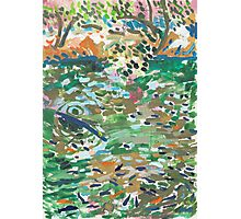 Fishpond Photographic Print