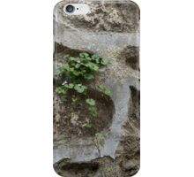 Life on Bare Rock - Trailing Down the Old Masonry Wall iPhone Case/Skin