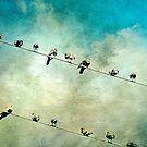 Birds on a High Wire by Scott Mitchell