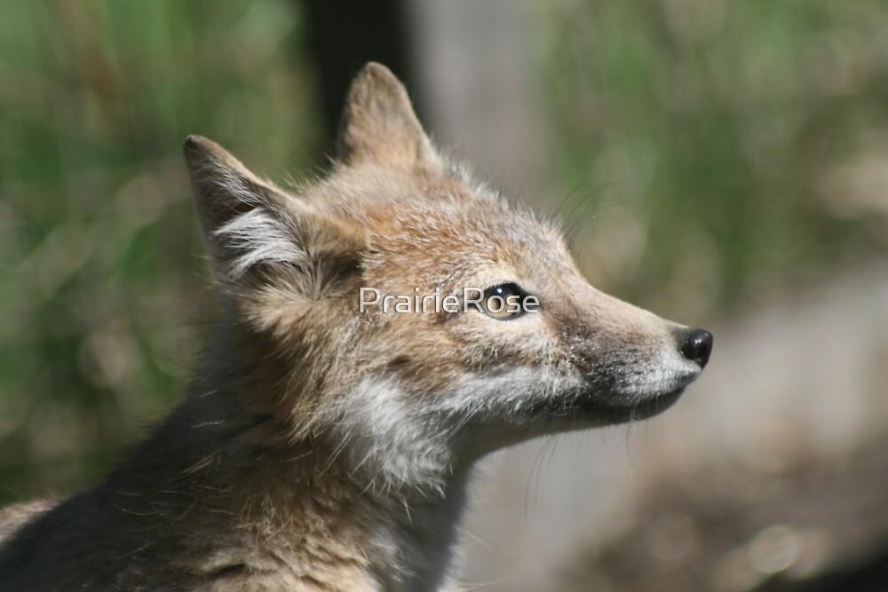 Swift Fox by PrairieRose