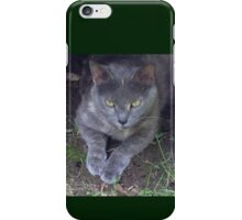 Gray Cat iPhone Case/Skin
