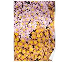 Floral Overflow - Vivacious Display of Multicolour Autumn Mums Poster