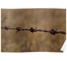 Barbed Wire in Decay Poster