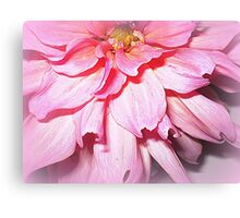 Lovely Pink Petals of the Dahlia Canvas Print