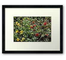 Bush with colorful flowers in the garden. Framed Print