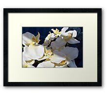 White plastic flowers. Framed Print