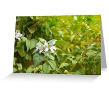 Sunny image with green leaves and small white flower. Greeting Card