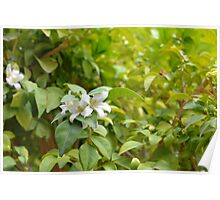 Sunny image with green leaves and small white flower. Poster