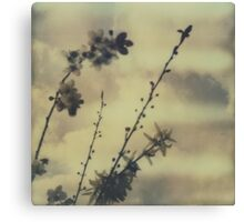 The contrast of flowers Canvas Print